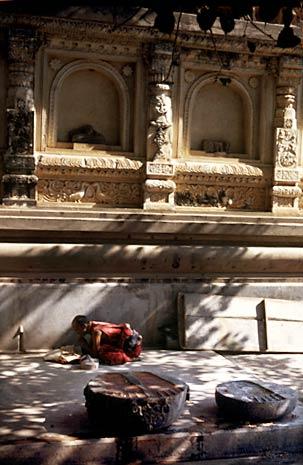 En munk läser under Bodhiträdet A munk reading under the Bodhi Tree
